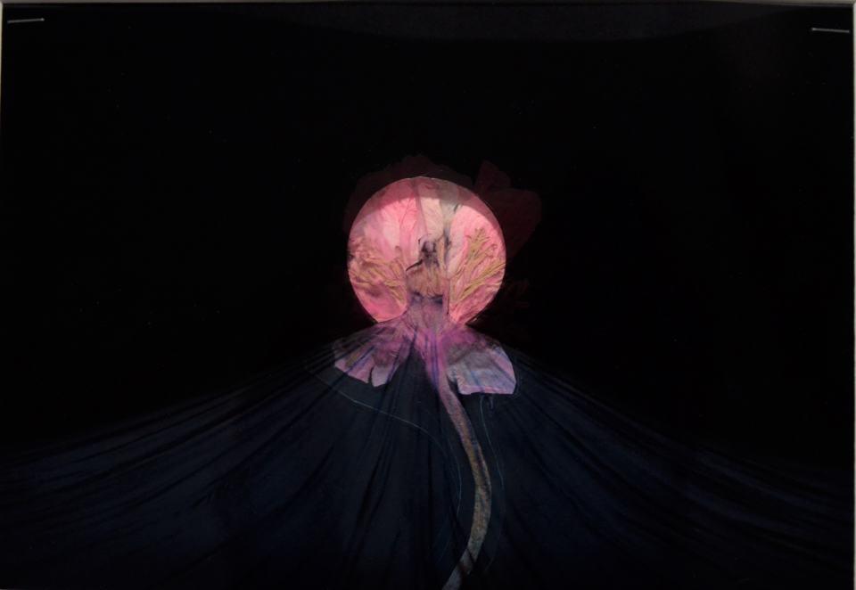 In der Sehnsucht der Nacht/2018/Fotografie Collage/Trockenblume/30x20cm | Klaus Fabricius | Artist Künstler | Information