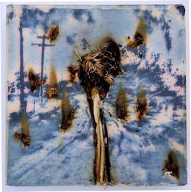 Stumpfer Sommer/2018/Fotografie/Acryl getrocknete Pflanzenstücke auf Wabenmkarton/30x30x8cm | Klaus Fabricius | Artist Künstler | Information